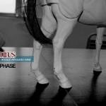 LOTR : Asmus Toys prépare un nouveau cheval