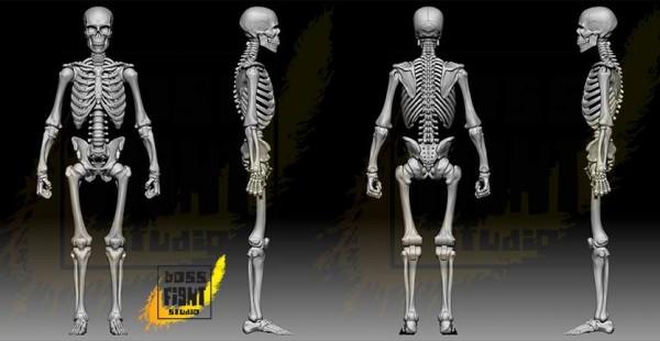 bsf squelette
