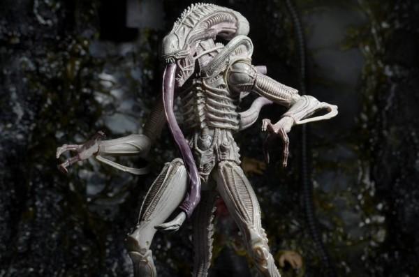 aliens neca vasquez froast albinos alien